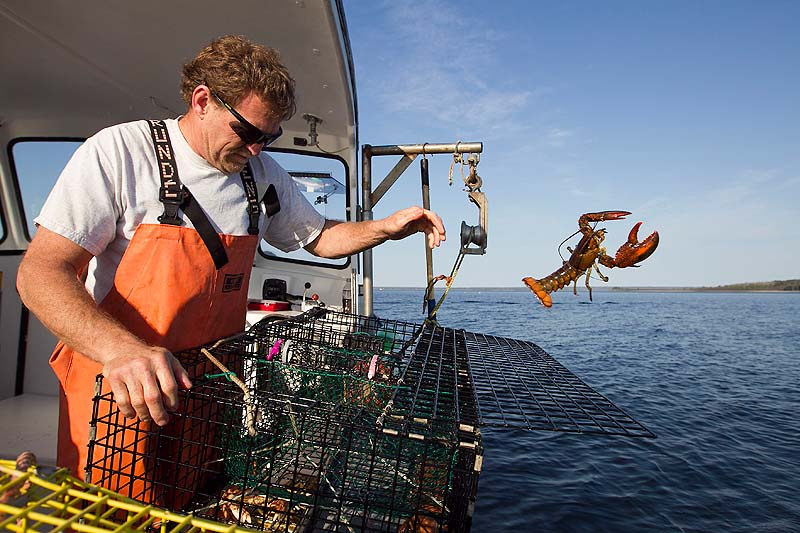 In this May 2012 file photo, Scott Beede returns an undersized lobster while checking traps in Mount Desert, Maine. Ocean temperatures are warmer-than-usual again in the Gulf of Maine, creating worries among lobstermen that there could be a repeat of last summer's early harvest that created a glut on the market and havoc within the industry.