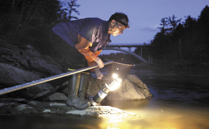 Bruce Steeves uses a lantern while dip netting for elvers on a river in southern Maine last year. The young, translucent eels swim upriver each spring in Maine and can fetch $2,000 a pound. The fishery's value last year was $38 million.