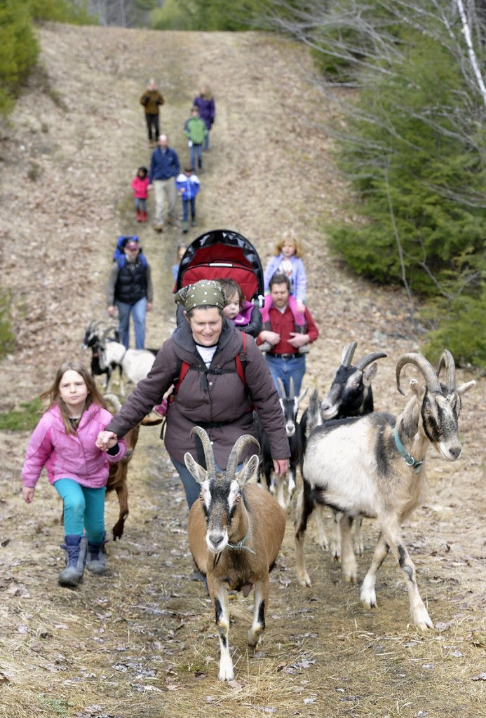 A goat shall lead them through the woods at Ten Apple Farm where Margaret Hathaway, wife of owner Karl Schatz, guides 6-year-old daughter Charlotte while keeping a respectful distance behind the herd's leader.