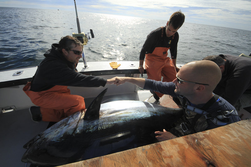 """From left, Capt. Dave Carraro of the boat FV-Tuna.com and deckhand Garon Mailman of Saco celebrate a big catch while deckhand Sandro Maniaci looks on in a scene from """"Wicked Tuna."""""""