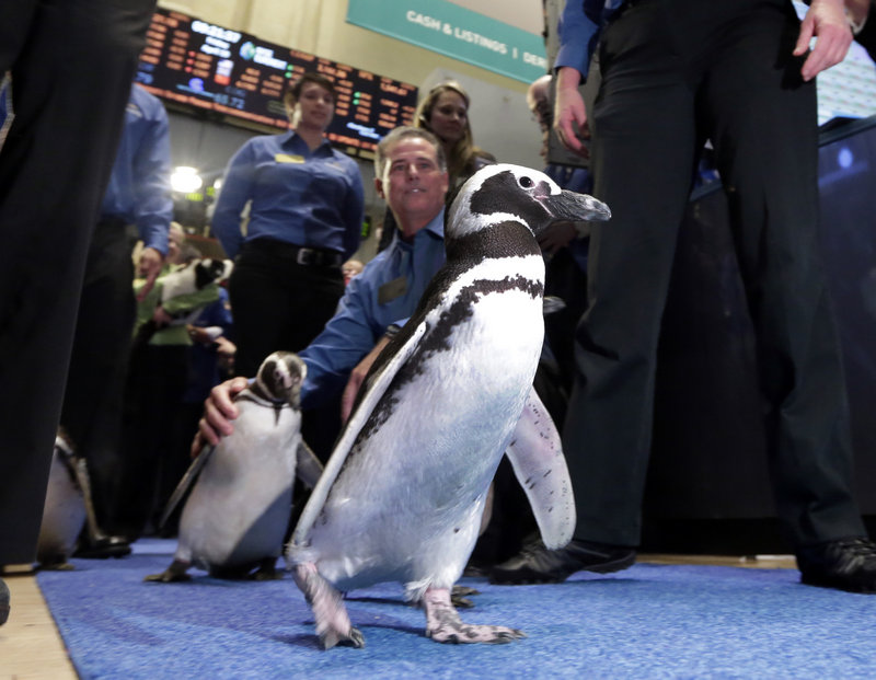 SeaWorld penguins are escorted by their handlers on the floor of the New York Stock Exchange during the company's IPO Friday. The stock rose 24 percent in its first trading day.