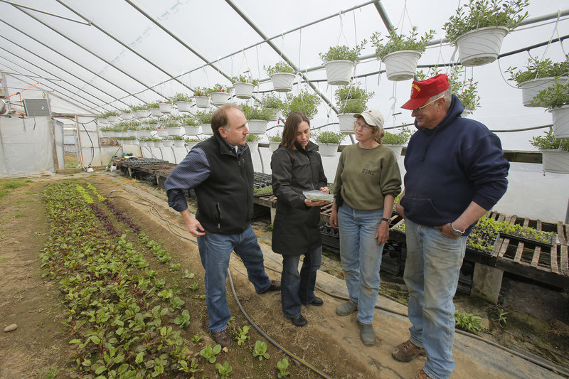 """Tod Yankee, left, and Jamien Richardson visit with Kathy and Pete Karonis in a greenhouse at the Karonises' Fairwinds Farm. Yankee and Richardson's Maine Harvest Co. will provide """"us, the farmer, an opportunity to market some of our seasonal produce throughout the whole season,"""" said Pete Karonis."""