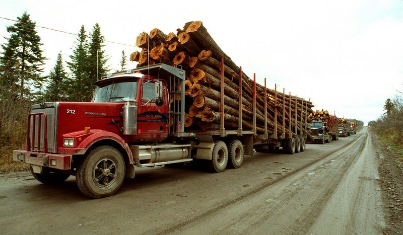 Maine's forests generate more than $5 billion a year to the economy through the production of timber and wood products. Tourism and recreation jobs also depend on the health of the forestry industry.