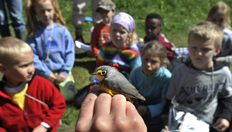 """Patrick Keenan holds a Canada warbler for students. """"At River Point, we're interested in timing, abundance and diversity of migratory songbirds,"""" he said."""
