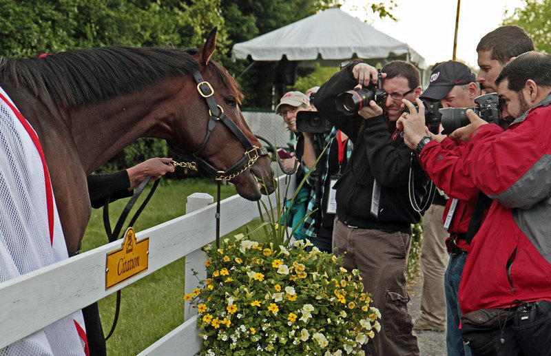 Kentucky Derby winner Orb grabs a snack outside the stakes barn at Pimlico Race Course on Wednesday. Orb was made the even-money favorite for the Preakness.