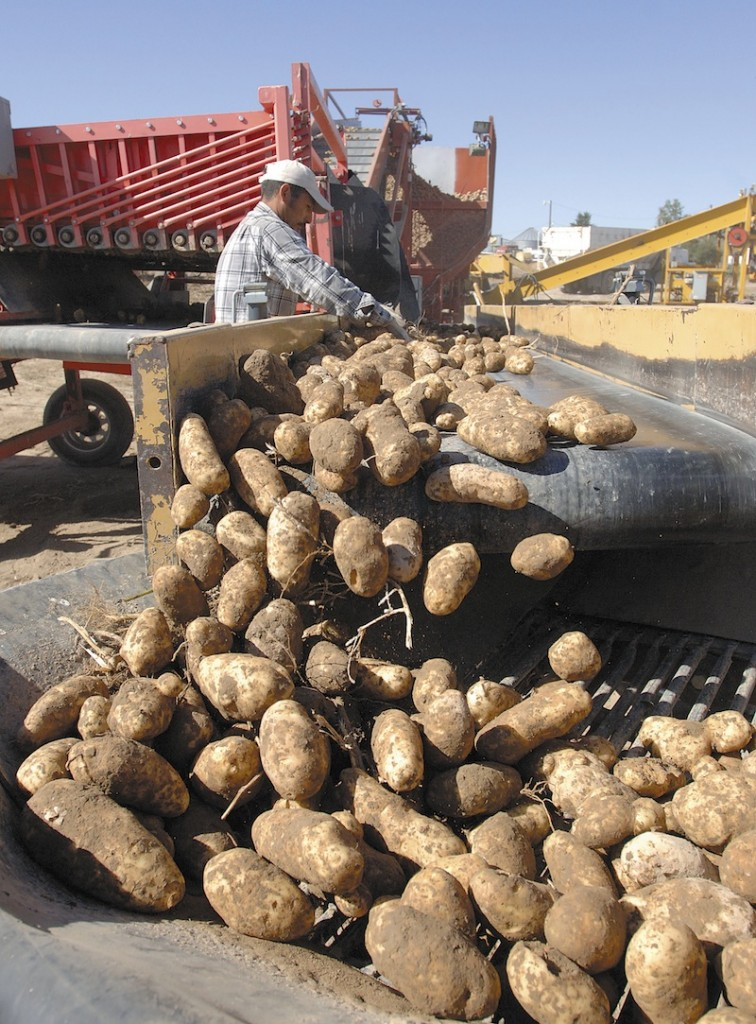 Potatoes are harvested at farm west of Idaho Falls , Idaho, in this September 2010 file photo. A U.S. wholesale grocer says America's potato farmers are running an illegal price-fixing scheme, driving up spud prices while spying on farmers with satellites to enforce strict limits on how many tubers they can grow. (AP Photo/Post Register, Robert Bower)