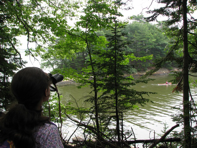 Bring a pair of binoculars when you visit Wolfe's Neck Woods State Park in Freeport. The kids will love getting a close look at the osprey nest.
