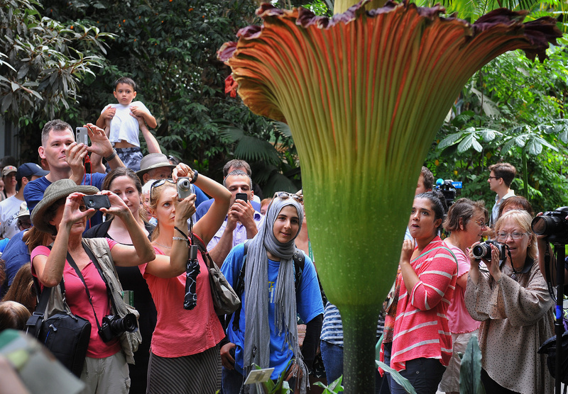 As many as 20,000 people came Monday to the U.S. Botanic Garden in Washington to see (and smell) the