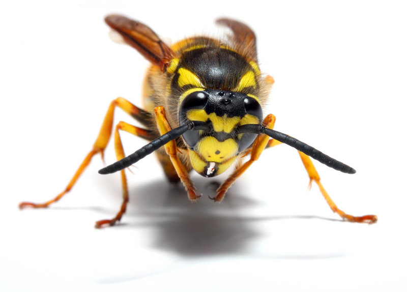 Other potential summer hazards to be aware of include bees and wild animals.