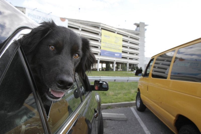 Max enjoys some fresh air while waiting in the car in the PIA cellphone lot with his owner, Jamie Kravec, who was picking up her boyfriend.