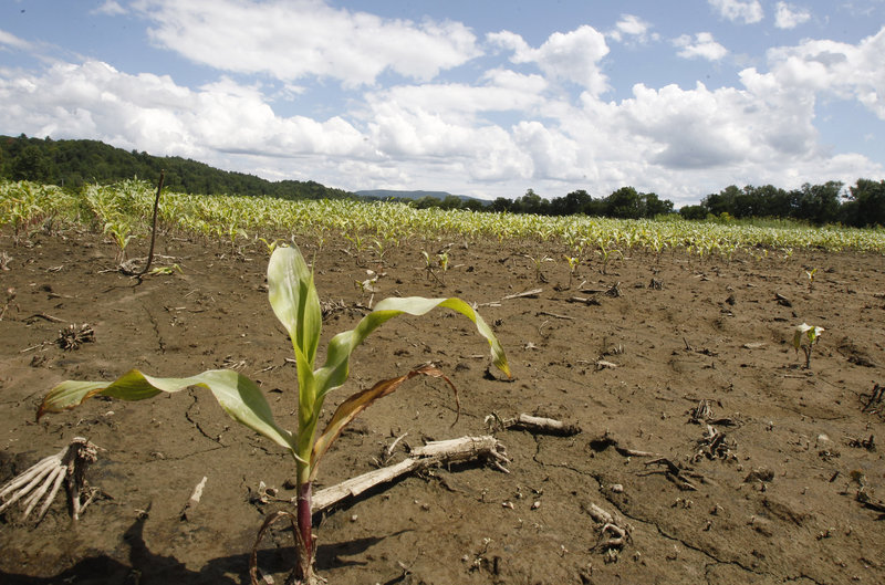 A flood-damaged corn field is seen on Thursday, July 11, 2013 in Williston, Vt. Vermont Gov. Peter Shumlin and Agriculture Secretary Chuck Ross outlined some of the steps farmers can take to cope with damage to fields and crops caused by the ongoing rains. (AP Photo/Toby Talbot)