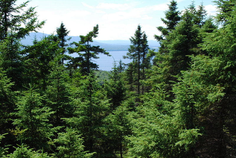The trails of Burnt Mountain offer impressive views of Moosehead Lake – and potential aplenty to bring more tourists to this largely unspoiled region.