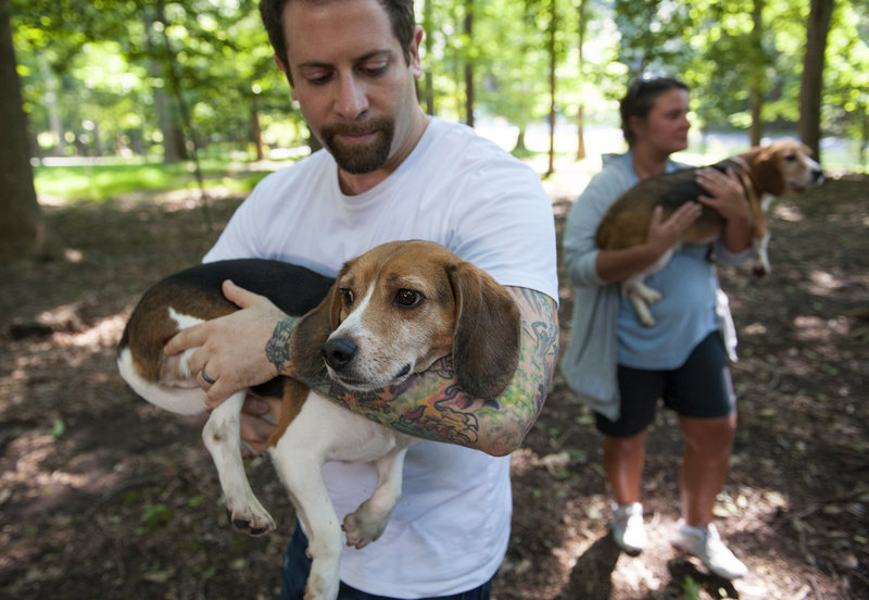 Ryan Shapiro carries a beagle rescued from a Virginia-based research laboratory and released to a foster family in Potomac, Md., with the help of the Beagle Freedom Project.
