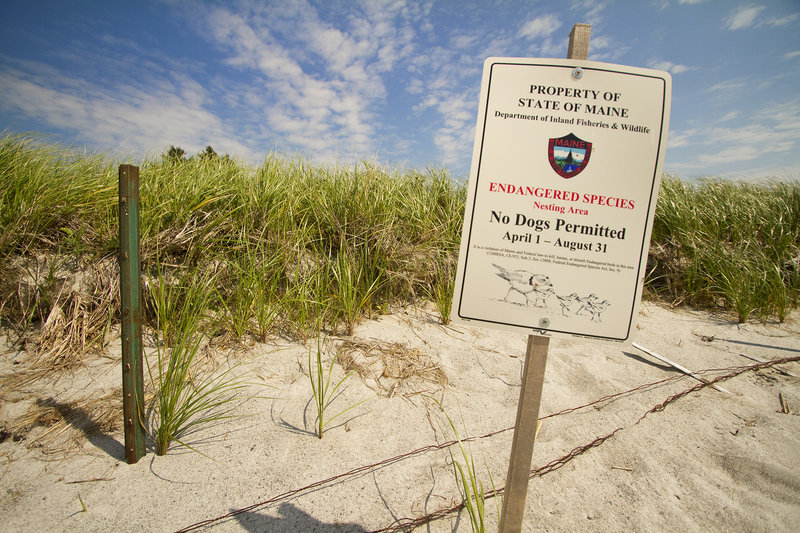 A sign on Pine Point Beach in Scarborough on Wednesday, July 17, 2013 indicates a plover nesting location. A plover was killed July 15 near an area marked off as restricted because of the presence of protected wildlife like the endangered plover.