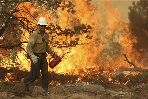 This Friday, Aug. 30, 2013 image provided by the U.S. Forest Service shows a member of the BLM Silver State Hotshot crew using a drip torch to set back fires on the southern flank of the Rim Fire in California. The blaze has scorched 343 square miles of brush, oaks and pines and 11 homes, as of Saturday Aug. 31, 2013.