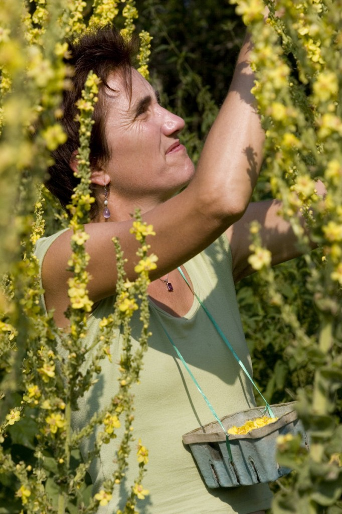 Deb Soule gets into medicinal plants as well as biodynamic preparations and basic garden tips in her new book.