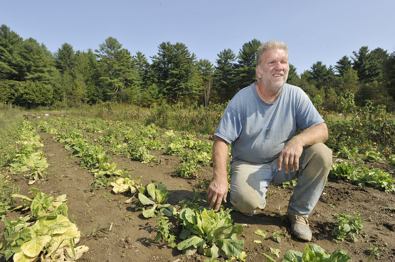 Farmer Bruce Hinck of Yarmouth has been having problems with deer eating his lettuce crop this season, which he believes is caused by the hundreds of train oil cars parked on a nearby siding which in effect trap them on his side of the train tracks.