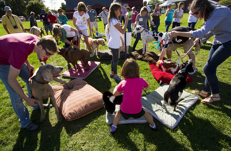 Adults and children guide their dogs during the popular musical dog beds event at the Woofminster 2013 amateur dog show at Camp Ketcha in Scarborough on Saturday.