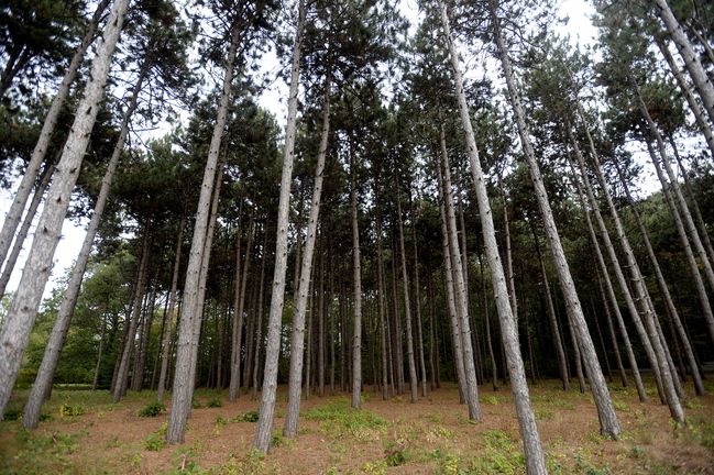The city of Portland has about 500 acres of community forests, including the 30-acre Baxter Woods between Forest and Stevens avenues.