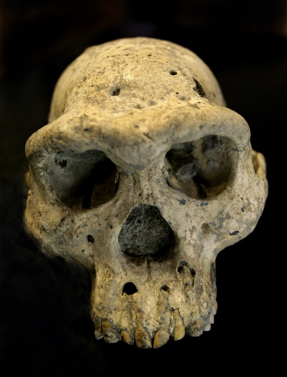 The skull found in the medieval Georgian village.