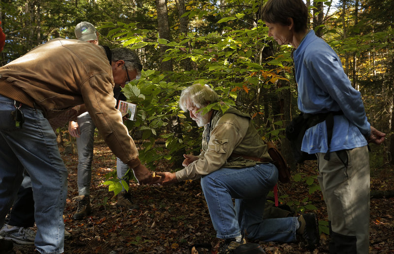 Fred Cichocki, a Maine Master Naturalist, center, shows Rob Prybylo, left, a group of mushrooms he found while leading a hike through the Thorne Head Preserve in Bath last week. At right is Dorcas Miller, a writer and field guide author.