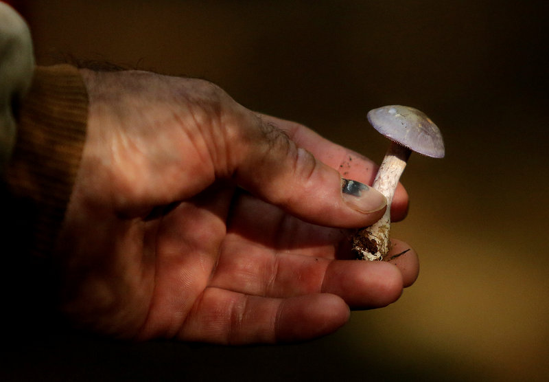 One mushroom in the hand is ... a web cap mushroom displayed by Rob Prybylo, a Maine Master Naturalist.