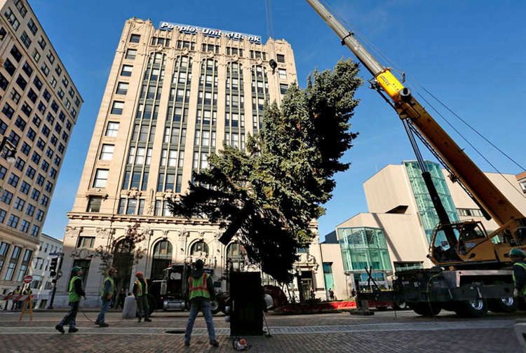 Workers position Portland's Christmas tree, a 55-foot blue spruce, in Monument Square last week. The tree will be lit .