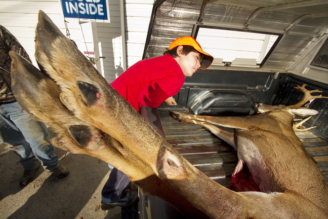 Ryan Taylor, 7, takes a closer look at an 11-point buck shot by his father, Ross Taylor of Yarmouth, at the Freedom tagging station Saturday.