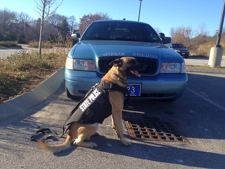 Winger, a 2-year-old Belgain Malinois, is a member of the canine unit that patrols Washington and Hancock counties. He is wearing one of eight new protective vests recently purchased with the help of a donation by Vested Interest in K9.