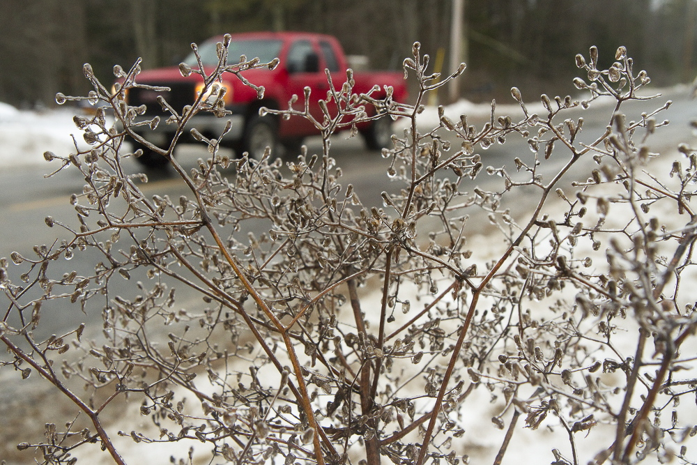 Ice encrusts a bush as a truck passes by on Saco Road in Standish on Sunday.