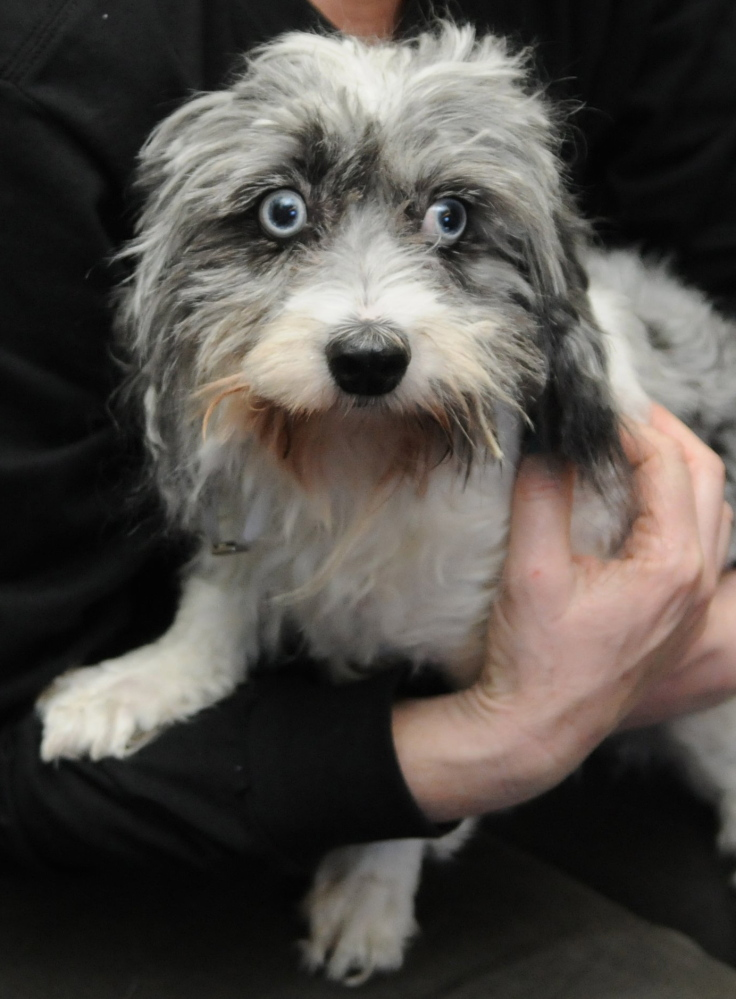This female Maltese mix dog was found in a West Islip, N.Y., trash bin.