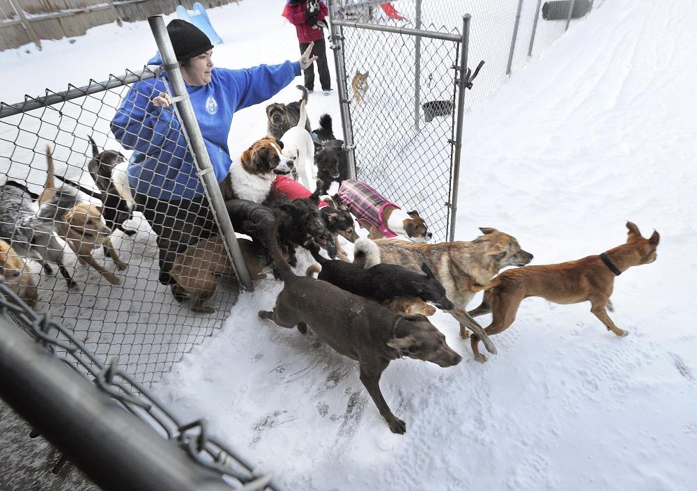 Kristi Moreau runs the Doggie Cottage dog day care business in Scarborough.