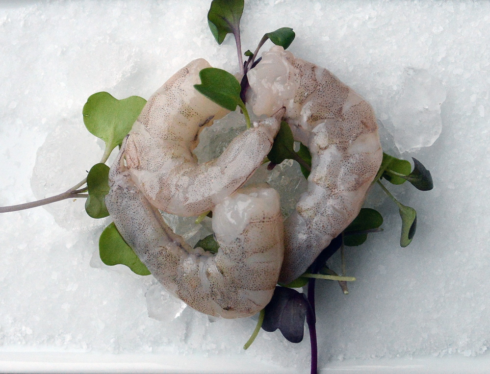 Buerhaus says the texture of the Laughing Bird shrimp is a little firmer than that of Maine shrimp, and the meat is not as sweet.