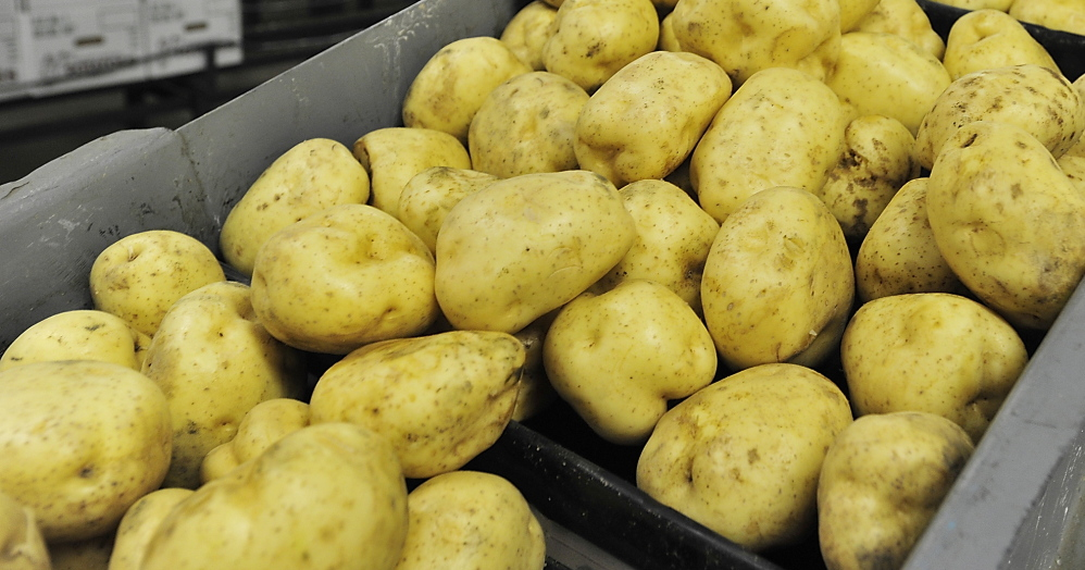 Potatoes, Maine's top crop, tumble down a conveyor at Green Thumb Farms in Fryeburg.