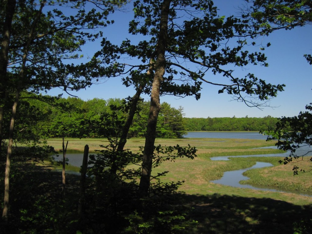 Wetlands intersect with Middle Bay on Brunswick-Topsharm Land Trust's Skolfield property.