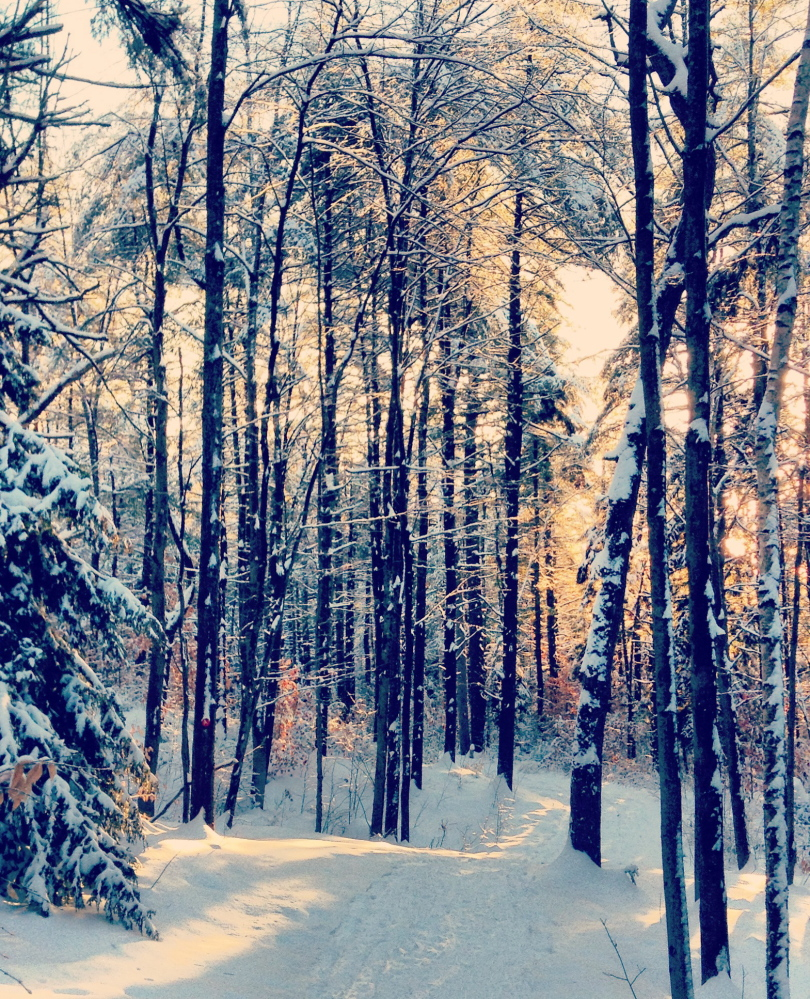 The Muskrat Hollow snowshoe trail at Pineland Farms is part of the 25-kilometer trail system for skiing and snowshoeing – one of the best trail networks in Maine. The Pineland Farms trails are open daily from 8 a.m. to 5 p.m.