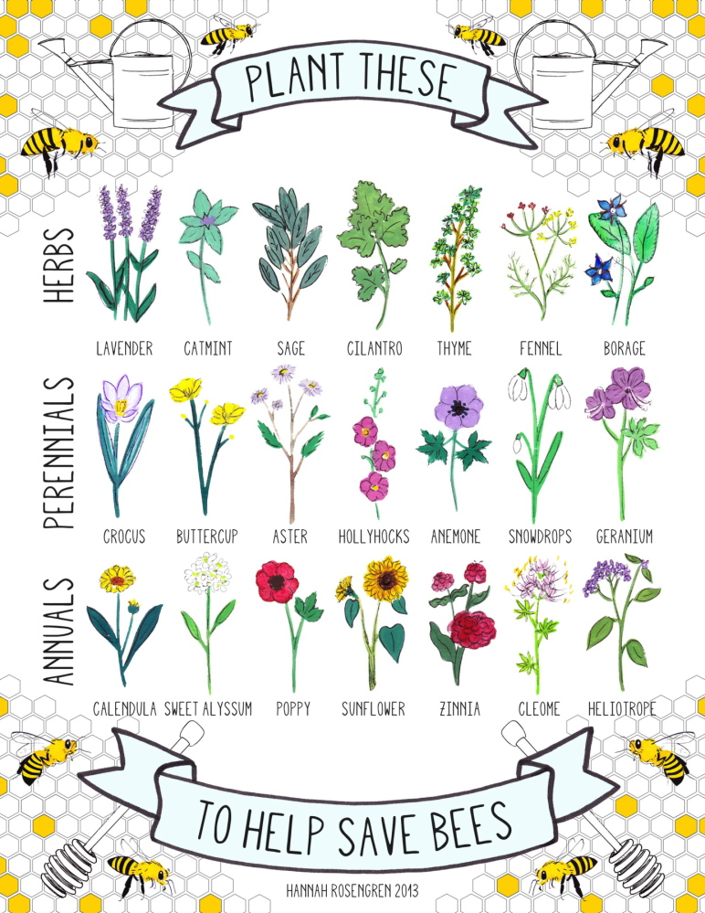 """Since she began selling her poster promoting plants and bees on Etsy, Hannah Rosengren has had interest from people as far away as Spain and Australia. """"I didn't expect anything like this to happen so soon after graduating,"""" said Rosengren, who finished her degree at MECA last year."""