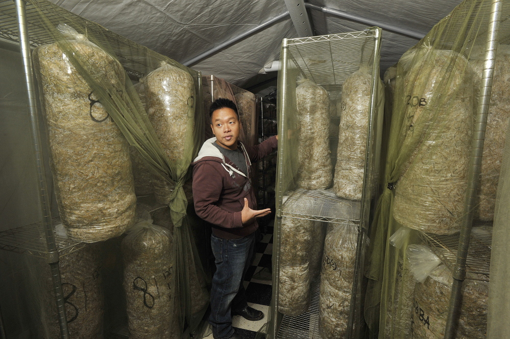Bountiful Mushrooms Farm co-owner Khanh Le shows the space where the farm's mushrooms are incubated.