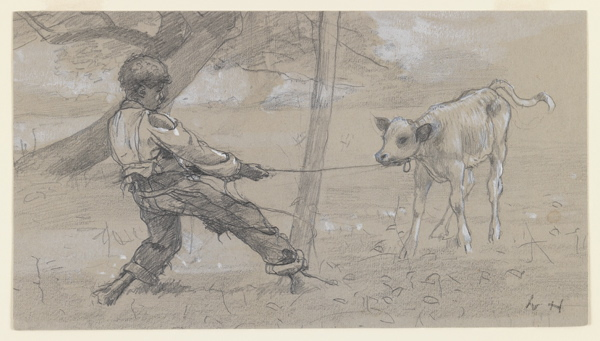 """Study for """"The Unruly Calf"""" by Winslow Homer, 1875-76."""
