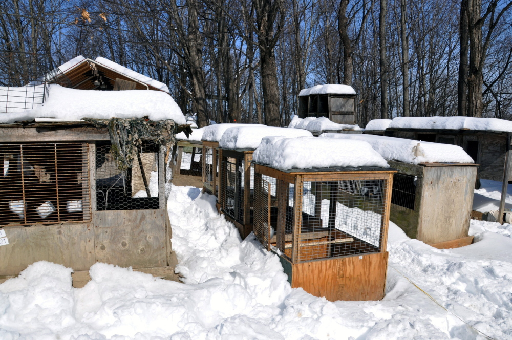 """This photo provided by the ASPCA shows """"Operation Angry Birds"""" in Ulster County, N.Y., on Sunday."""