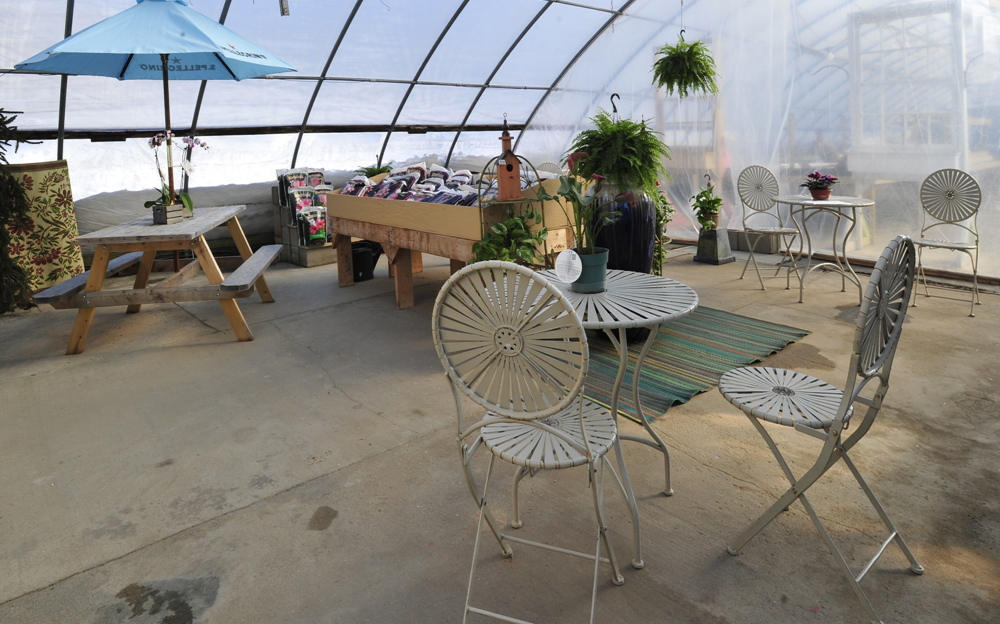 The new eating area, bright and sunny with lots of plant life.