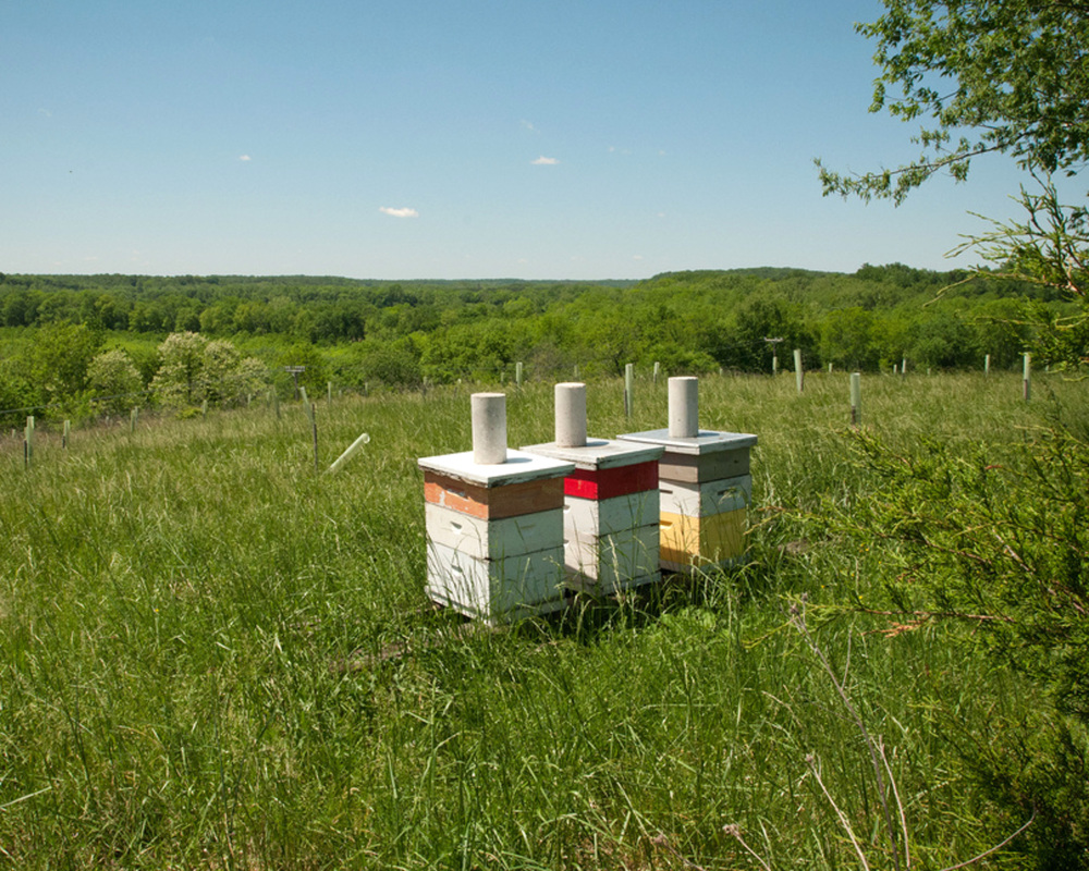 Three of 80 beehives on Brookview Farm in Manakin-Sabot, Va.. The USDA hopes to help honeybees in five states where 65 percent of the nation's estimated 30,000 commercial beekeepers bring hives for at least part of the year.