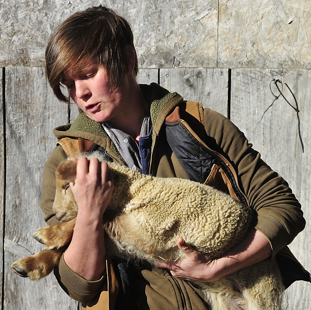 When Kaitlyn Gardner, the farm's teen agriculture coordinators, put out word of a lamb-watch on social media, it even attracted some urbanites who became charmed by the wonders of rural life.