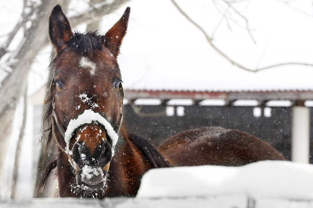 A horse looks across a fence during a snow storm, west of Berryville, Va., Monday March 17, 2014. The winter-weary faced another treacherous morning in parts of the Mid-Atlantic as snow and frigid weather blew in just days before the start of spring.