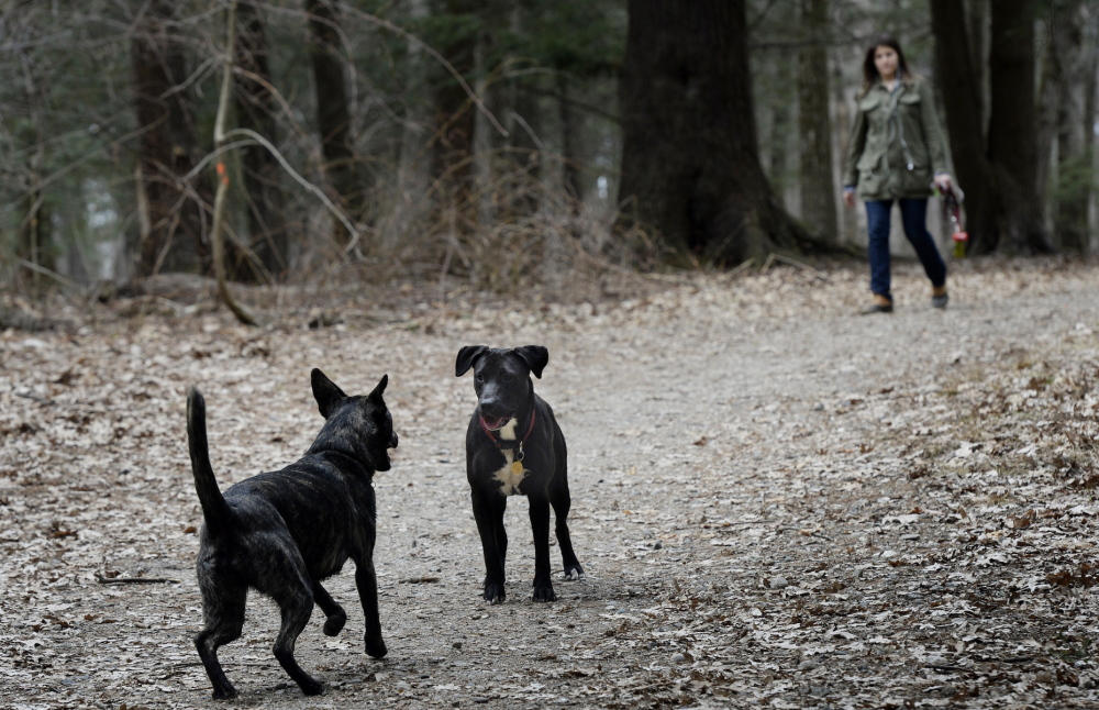 Moriah Duval of Portland walks her dog Penelope, center, and a friend's pooch, Kyra, during a visit to Mayor Baxter Woods in Portland on Tuesday. Dogs are allowed off-leash in the park if they're under voice control, but some visitors to the woods complain about the effect loose dogs can have on children and others.