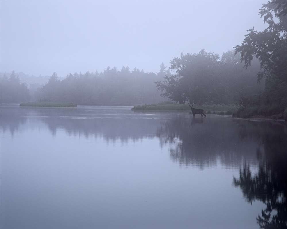 """Photos by Scot Miller, part of """"Thoreau's Maine Woods: A Journey in Photographs with Scot Miller"""" at the Harvard Museum of Natural History"""