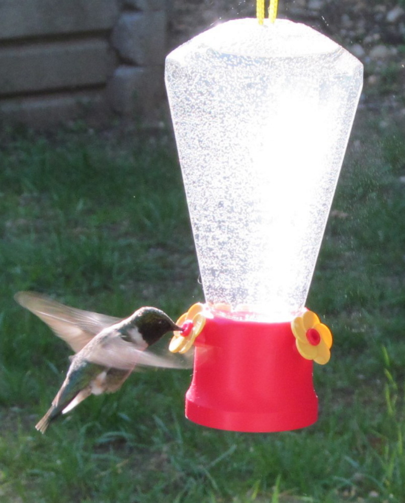 This hummingbird has ample reason to frequent this New Gloucester yard, where Brian Lovering took this photo.