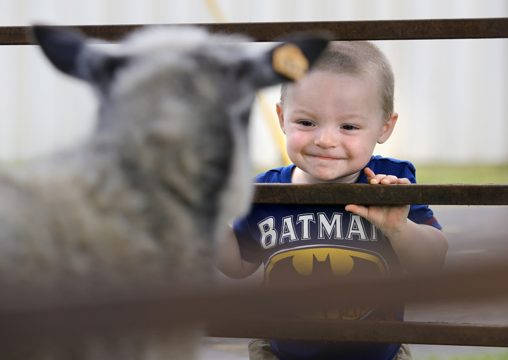 James Pulsifer, 2, of Freedom turns on the charm while trying to make friends with an Icelandic sheep at the Maine Fiber Frolic  at the Windsor Fairgrounds on June 7. The annual event features wool products from local farmers, new and used equipment, demonstrations and wooly animals both for sale and for show. Derek Davis/Staff Photographer
