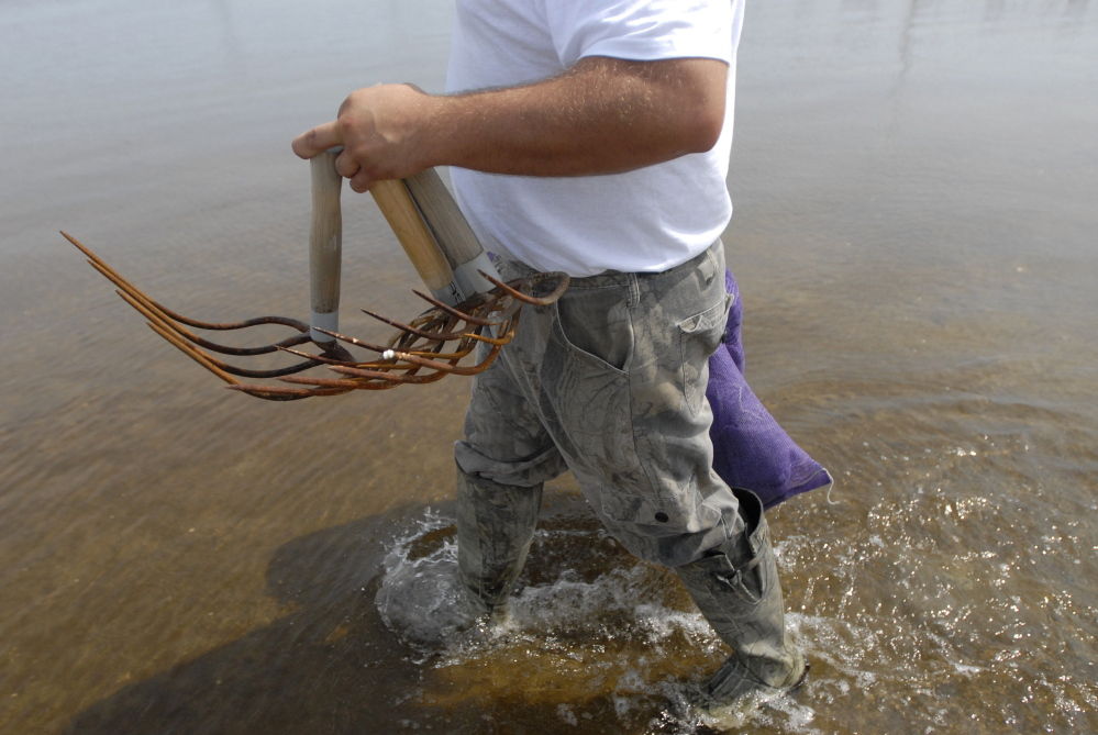 Some clam flats have been closed to harvesting in southern Maine because of a mild red tide bloom.