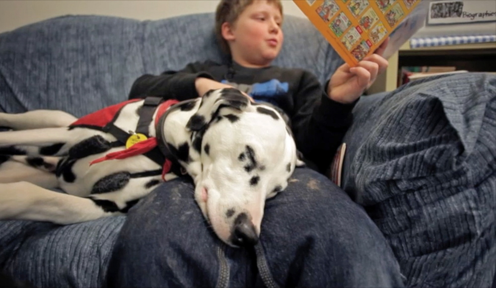 Even if Ghost isn't really listening, the champion Dalmatian's presence helps 9-year-old Joshua Stultz focus on his reading, as the relaxed dog has a way of chasing away all the boy's distractions during a session at Harrison Elementary School. Amelia Kunhardt/Staff Photographer